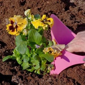 Plantering rosa Handigger